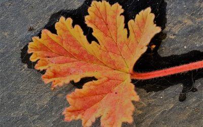 Autumn…